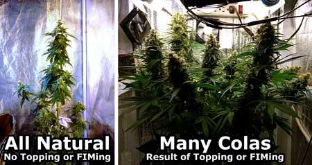 topping-fiming-vs-na tural-diagram-sm