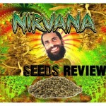 Nirvana Seeds - Order Review | Cannabis Seed Bank