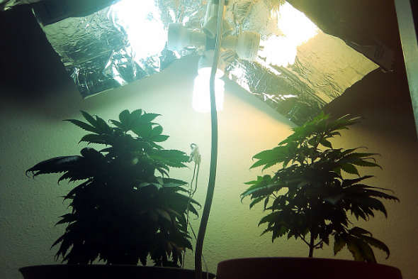 How to Make the Easiest CFL Grow Lights